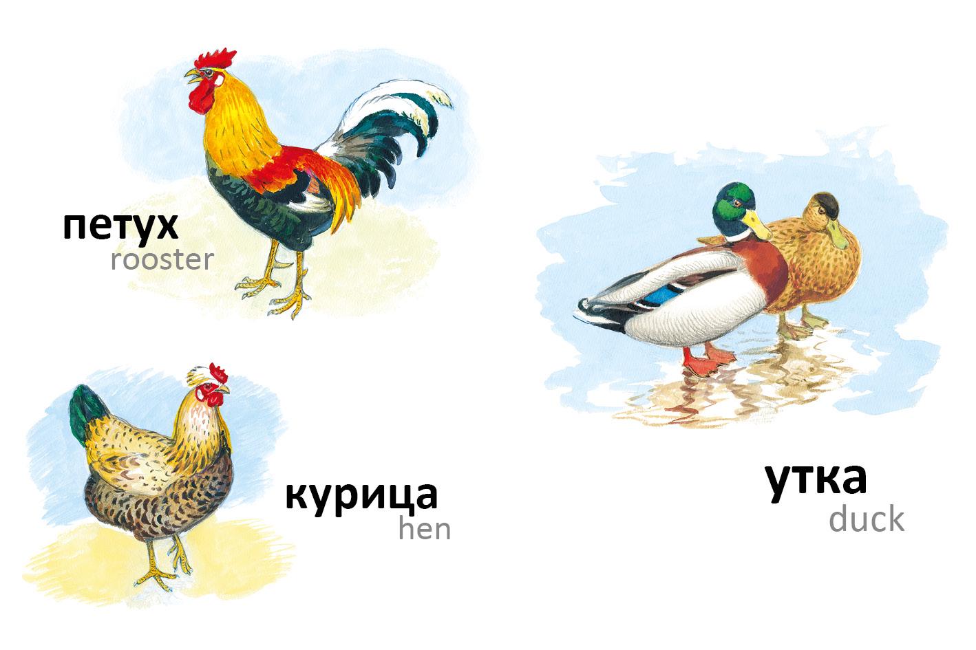 картинки домашних животных и птиц для малышей животные излюбленная тематика